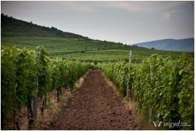 Angyal Inn Wine & Spa, Ratka, In the summer
