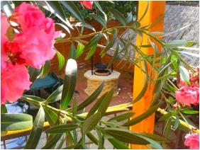 Belső kert, Deák Vendégház, Hajdúszoboszló
