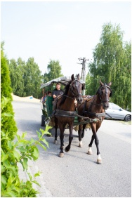 Hotel Aphrodite, Zalakaros, Horse riding