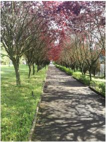 Tavasz, Salvus Family Pihenő Park, Bükkszék