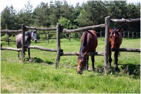 Teleki-Degenfeld Castlehotel, Szirak, Horse riding