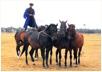 Horse-show in Lajosmizse